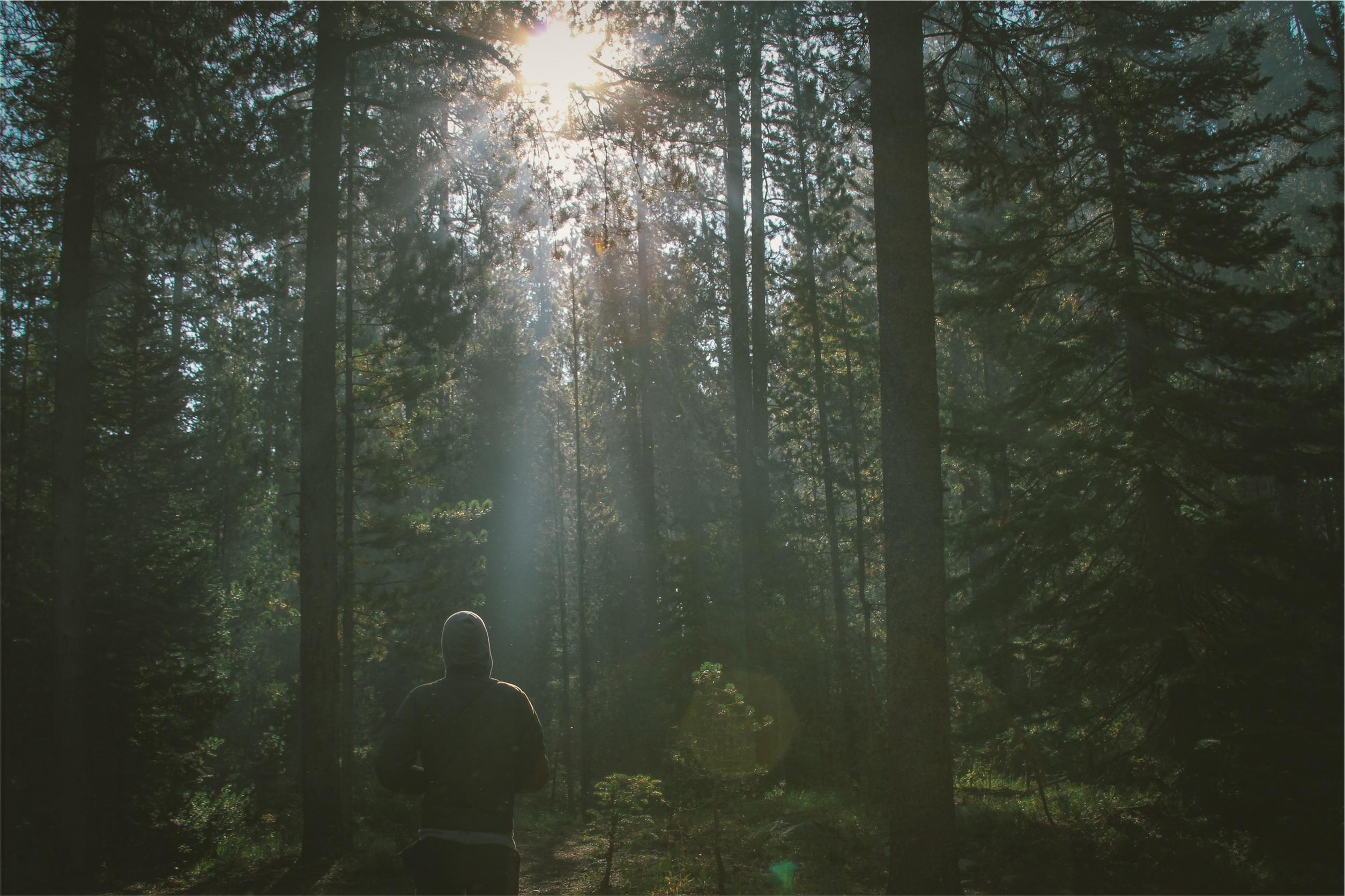 Skovgravplads